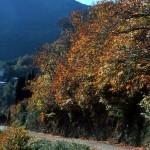 In der Castagniccia lebt die Seele Korsikas