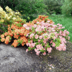 Gärten in Nordirland